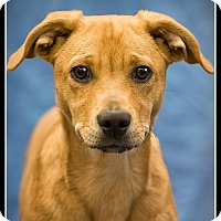 Adopt A Pet :: Lucky - Wickenburg, AZ