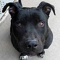 Labrador Retriever Mix Dog for adoption in Phoenix, Arizona - Boyd