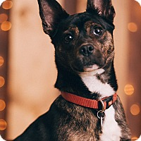 Adopt A Pet :: Xena - Portland, OR