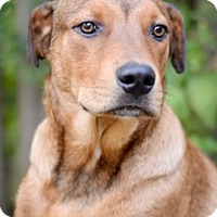 Adopt A Pet :: Sheldon - Little Rock, AR