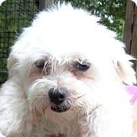 Adopt A Pet :: Little Bit - Crump, TN