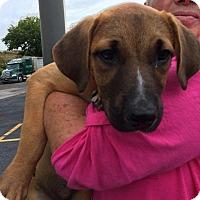 Adopt A Pet :: Sandie - Homer, NY