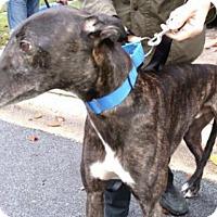 Adopt A Pet :: Todd - Spencerville, MD