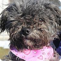 Adopt A Pet :: LU LU - Clayton, NJ
