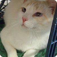 Adopt A Pet :: Tonya - Buhl, ID