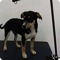 Adopt A Pet :: PEQUI - Calgary, AB