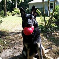 Adopt A Pet :: Stellaluna - Morrisville, NC