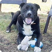 Adopt A Pet :: MJ - Patterson, CA