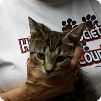 Adopt A Pet :: Pookie - Port Clinton, OH