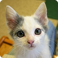 Adopt A Pet :: Charlie Brown Kittens - Hastings, NE
