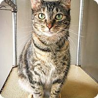 Adopt A Pet :: Jessa - Fredericksburg, TX