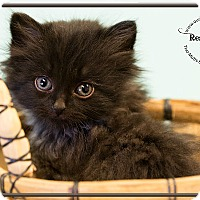 Adopt A Pet :: Black Hills - Washburn, WI