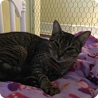 Adopt A Pet :: Raina - Dalton, GA