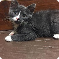 Adopt A Pet :: Enrique - Philadelphia, PA