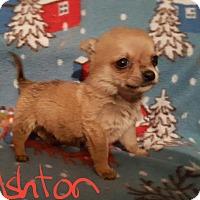 Adopt A Pet :: Ashton - Sussex, NJ