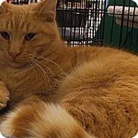 Adopt A Pet :: Quinn - Bear, DE