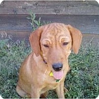 Adopt A Pet :: Daisy - Denver, CO