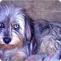 Adopt A Pet :: Camille - dewey, AZ