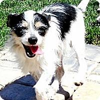 Adopt A Pet :: Dewey - Oakley, CA