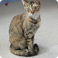 Adopt A Pet :: Sienna - Grand Chain, IL