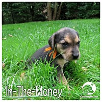 Adopt A Pet :: In the Money - Novi, MI
