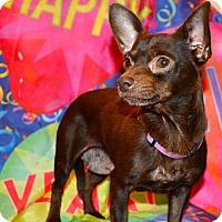 Adopt A Pet :: Helia - Simi Valley, CA