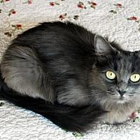 Adopt A Pet :: Betsy - Auburn, CA