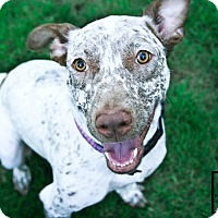 Adopt A Pet :: Sandy - Minneapolis, MN