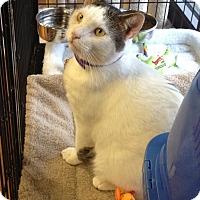 Adopt A Pet :: Rocky- Adoption Pending - Horsham, PA