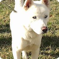 Adopt A Pet :: Cain - Zanesville, OH
