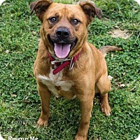 Adopt A Pet :: LaFonda - Lincolnton, NC