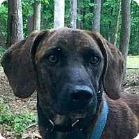 Adopt A Pet :: Rufus - Washington, DC