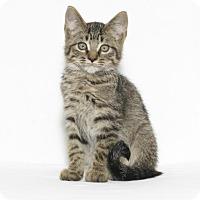 Adopt A Pet :: Noodle - Lufkin, TX