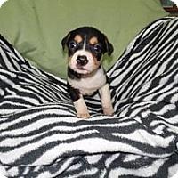 Adopt A Pet :: Atheana meet me 7/22 - Manchester, CT