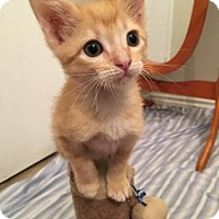 Adopt A Pet :: Quark - Austin, TX