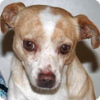 Adopt A Pet :: Mulder - Wildomar, CA