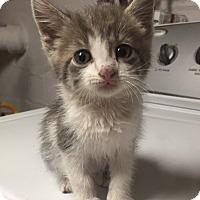 Adopt A Pet :: Shelby - River Edge, NJ