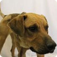 Shepherd (Unknown Type) Mix Dog for adoption in Huachuca City, Arizona - Rebel