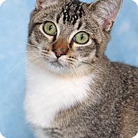 Adopt A Pet :: Elvis - Encinitas, CA