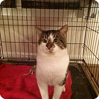 Adopt A Pet :: Romeo - Northfield, OH
