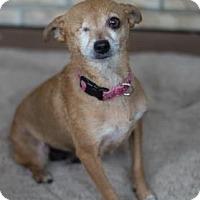 Adopt A Pet :: Thelma - Lakeland, FL