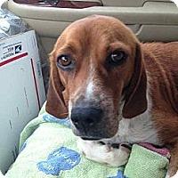 Adopt A Pet :: Bubba - Alamosa, CO