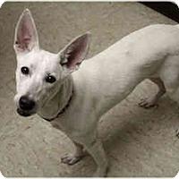 Adopt A Pet :: Stella - Racine, WI