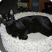 Adopt A Pet :: Zorro - Southington, CT