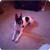 Adopt A Pet :: RUSSELL - Scottsdale, AZ