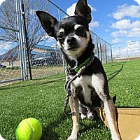 Adopt A Pet :: Diego - Meridian, ID