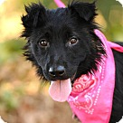 Adopt A Pet :: Tulip - calm sweetie @ shelter