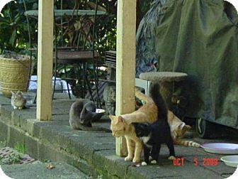 Domestic Shorthair Cat for adoption in Spotsylvania, Virginia - Barn Cats - Free