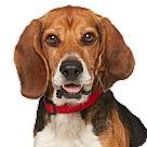 Adopt A Pet :: Garrett