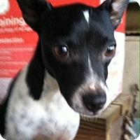 Adopt A Pet :: Molly - Natchitoches, LA